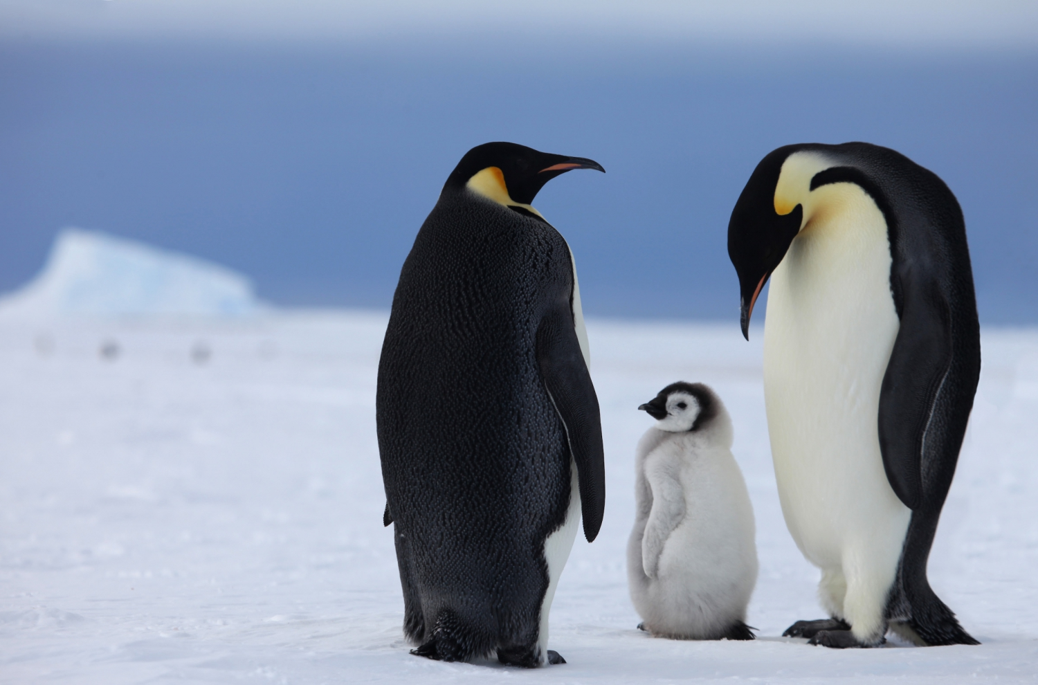 Antartica AustraAW Private Travel